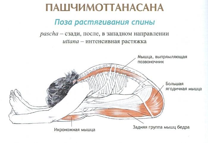 работа мышц в наклоне